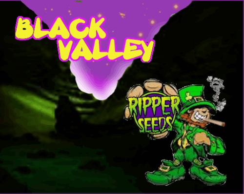 1233283176_blackvalleyripperseeds.PNG