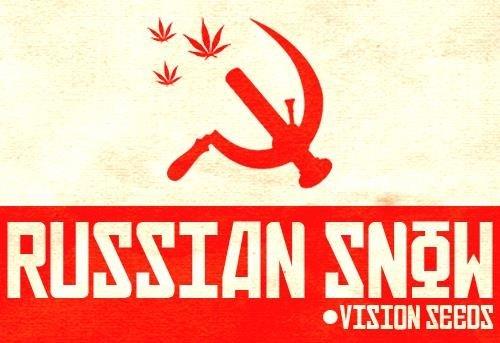 1360329718_russiansnowvisionseeds.JPG