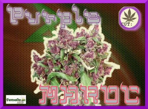 1387872909_purplemaroc.PNG