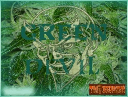 139299133_greendeviltikiseedbank.JPG