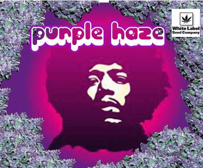 1424052567_purplehazewhitelabel.PNG