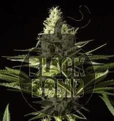 1507821355_blackbomb2.JPG