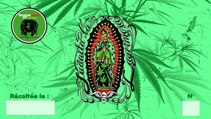 1609214570_juanita-reggaeseeds.JPG