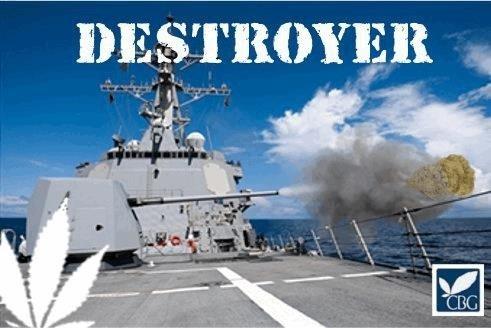 1722038695_destroyercannabiogen.JPG