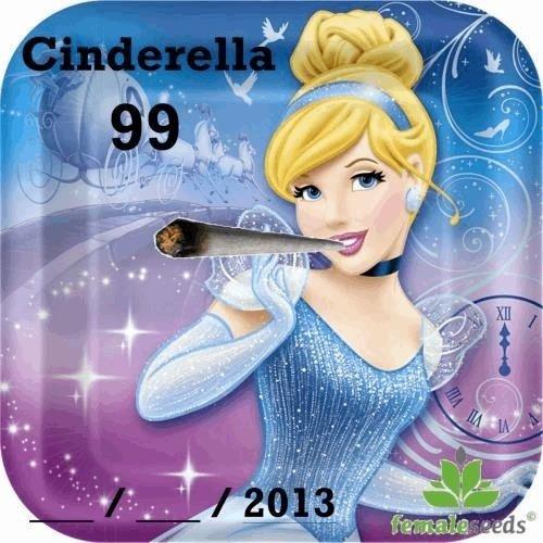 1862360129_cinderella99femaleseeds.JPG
