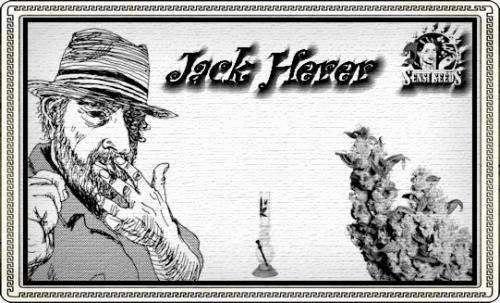 2129311868_jackherersensi-seeds.JPG
