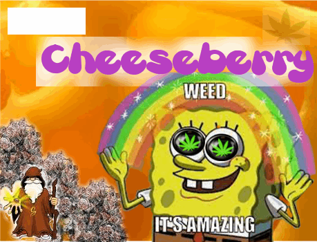 2147447828_chesseberrysannies.PNG