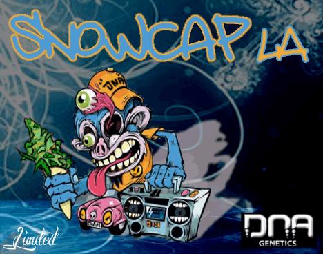 430304692_snowcapLA-dnagenetics.PNG