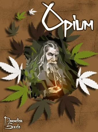 445248928_opiumparadiseseeds.JPG