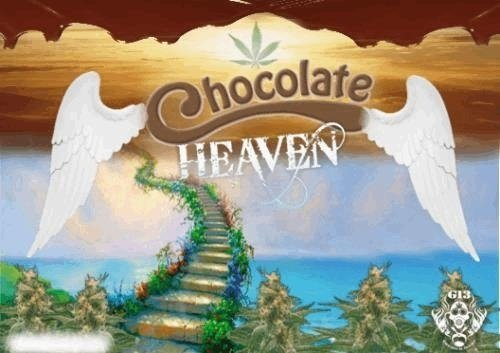 524670689_chocolateheaveng13labs.JPG