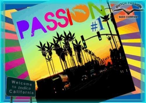 538382105_passion1.JPG