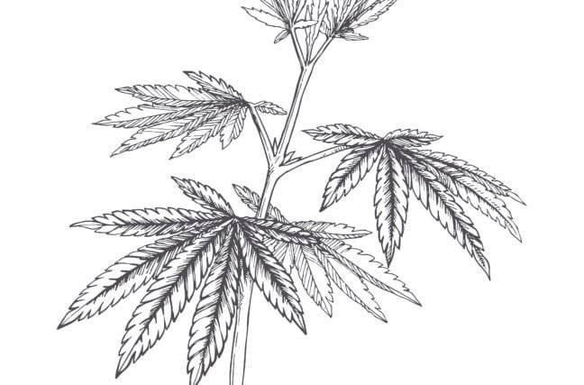 Cannabis légal : faut-il oser ?
