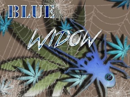 764677616_bluewidow.JPG