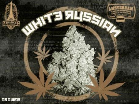 844116528_whiterussian.JPG