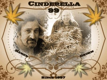 cinderella99.JPG