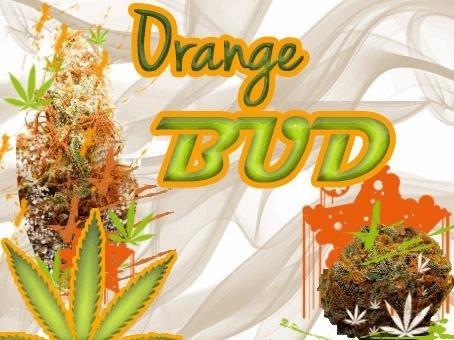 orangebud.JPG