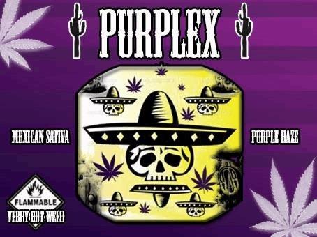 purplex.JPG