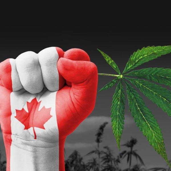 Cannabis: le Canada poursuit son leadership mondial