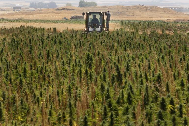 Liban : Beyrouth se lance dans l'export de cannabis thérapeutique