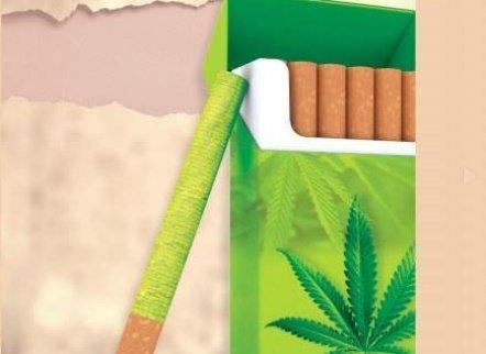 Jamaïque - le cigarettier Carreras examine la possibilité de produire des sticks de cannabis légaux.