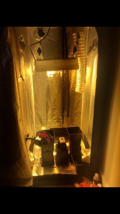 prise température box vide