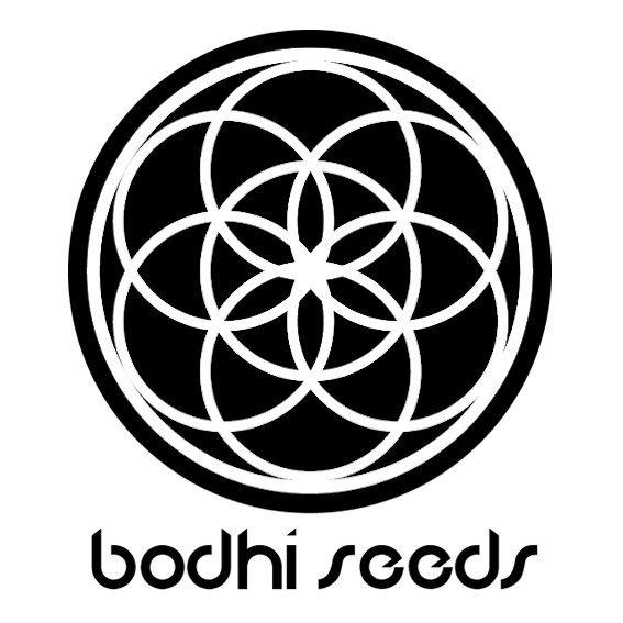 BodhiSeeds.jpg