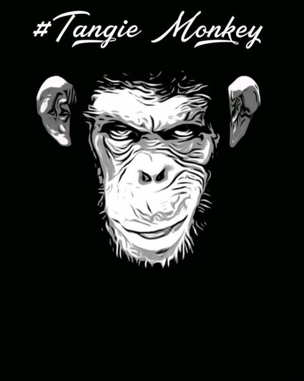 Tangie monkey.jpg
