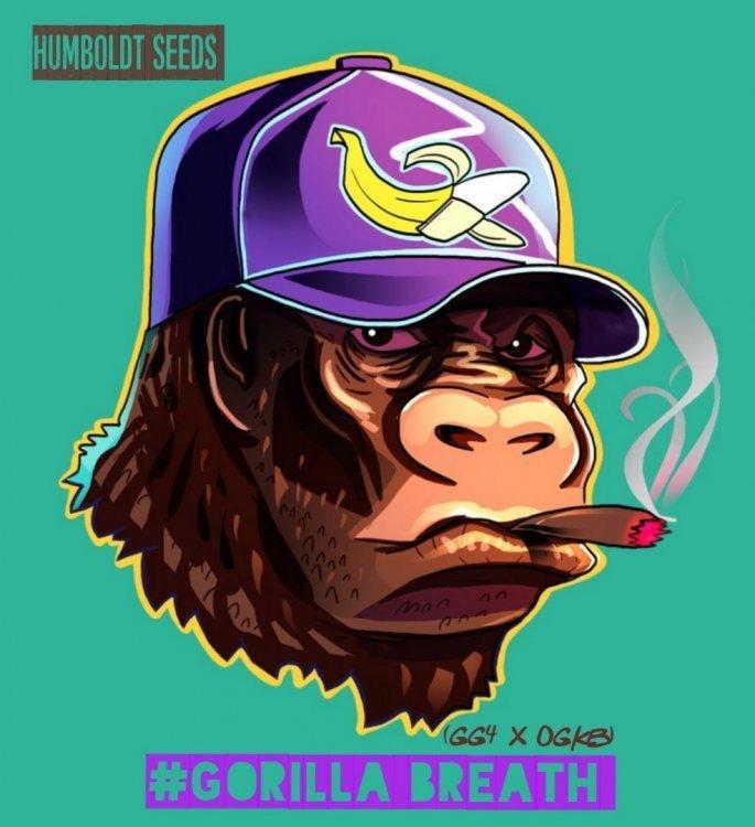 gorilla breath 2.jpg
