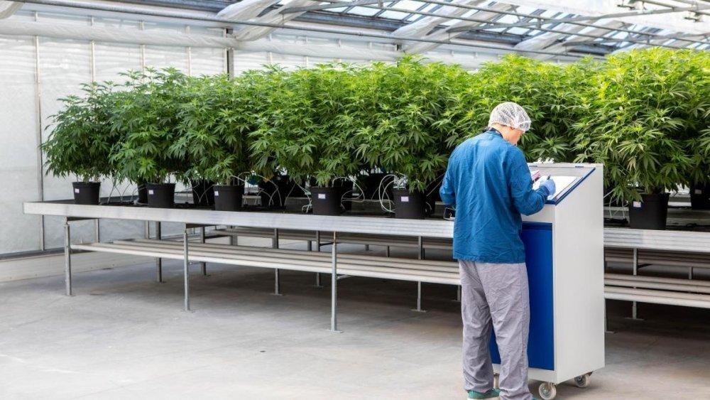[Belgique] - Légaliser le cannabis: comment ça pourrait rapporter 144 millions d'euros à l'État