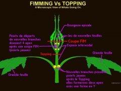 FIM vs Topping.jpg