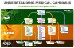 cannabinoides-médecine.jpg