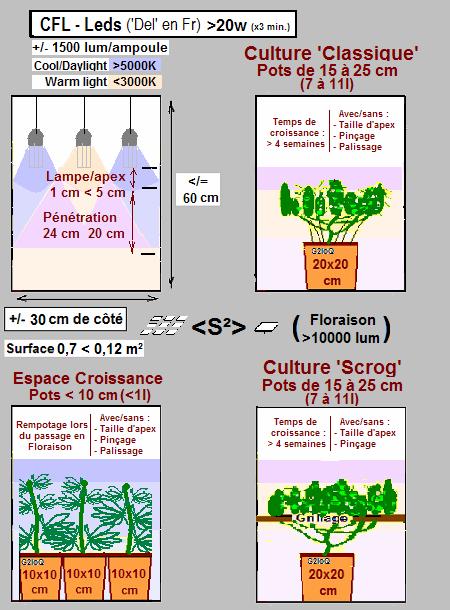 Culture La Cannaweed Débutants Bien Indoor Démarrer Pour Nvm0w8yOn