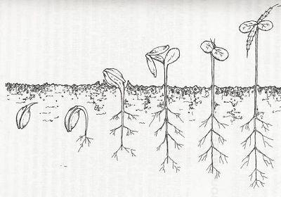 germination guide.jpg
