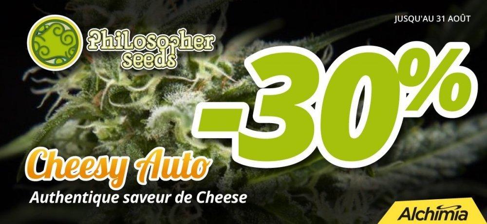 1200px-cheesy-auto-fr (1).jpg