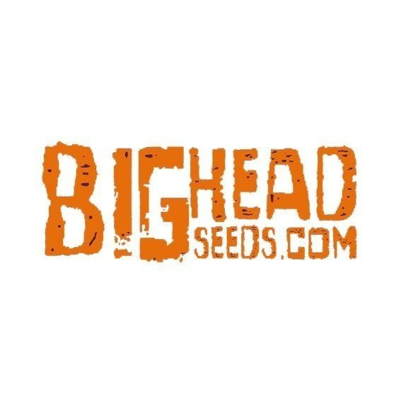 Big Head Seeds