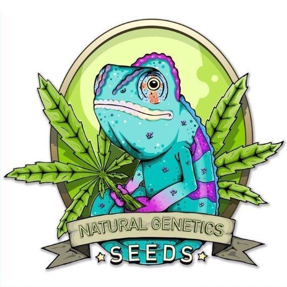 Natural Genetics Seeds