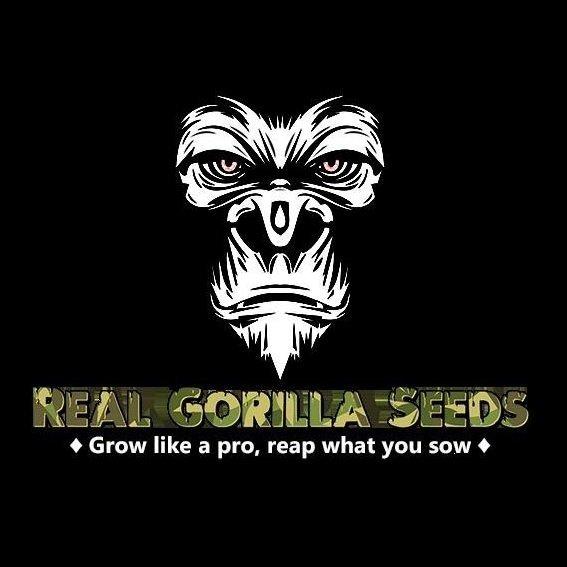 Real Gorilla Seeds