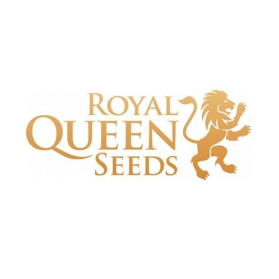 RoyalQueenSeeds.jpg