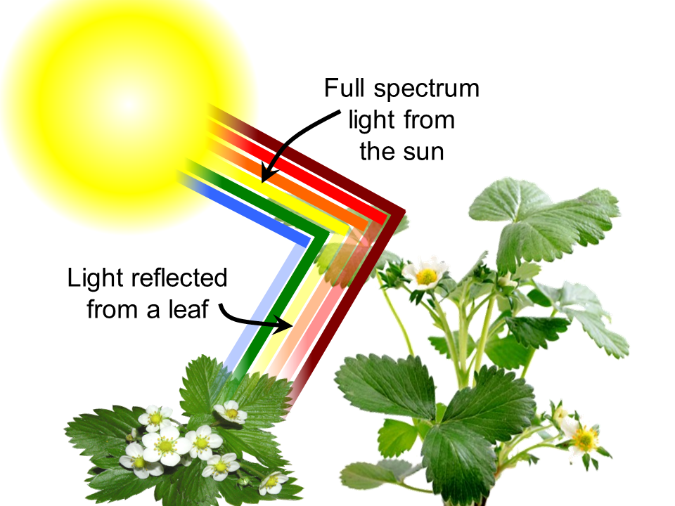 Leaf-reflectance-1.png.2d2d8db7f757ddaaf579aa96cf362042.png