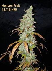 Heaven Fruit B