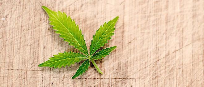 Italie - le Parlement légalise le cannabis light