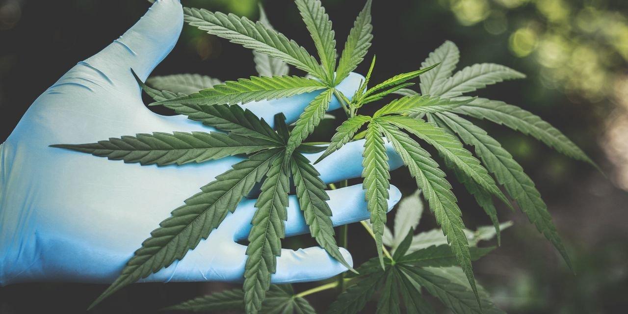 Belgique - Une pétition réclame un cadre légal pour les clubs de consommateurs de cannabis