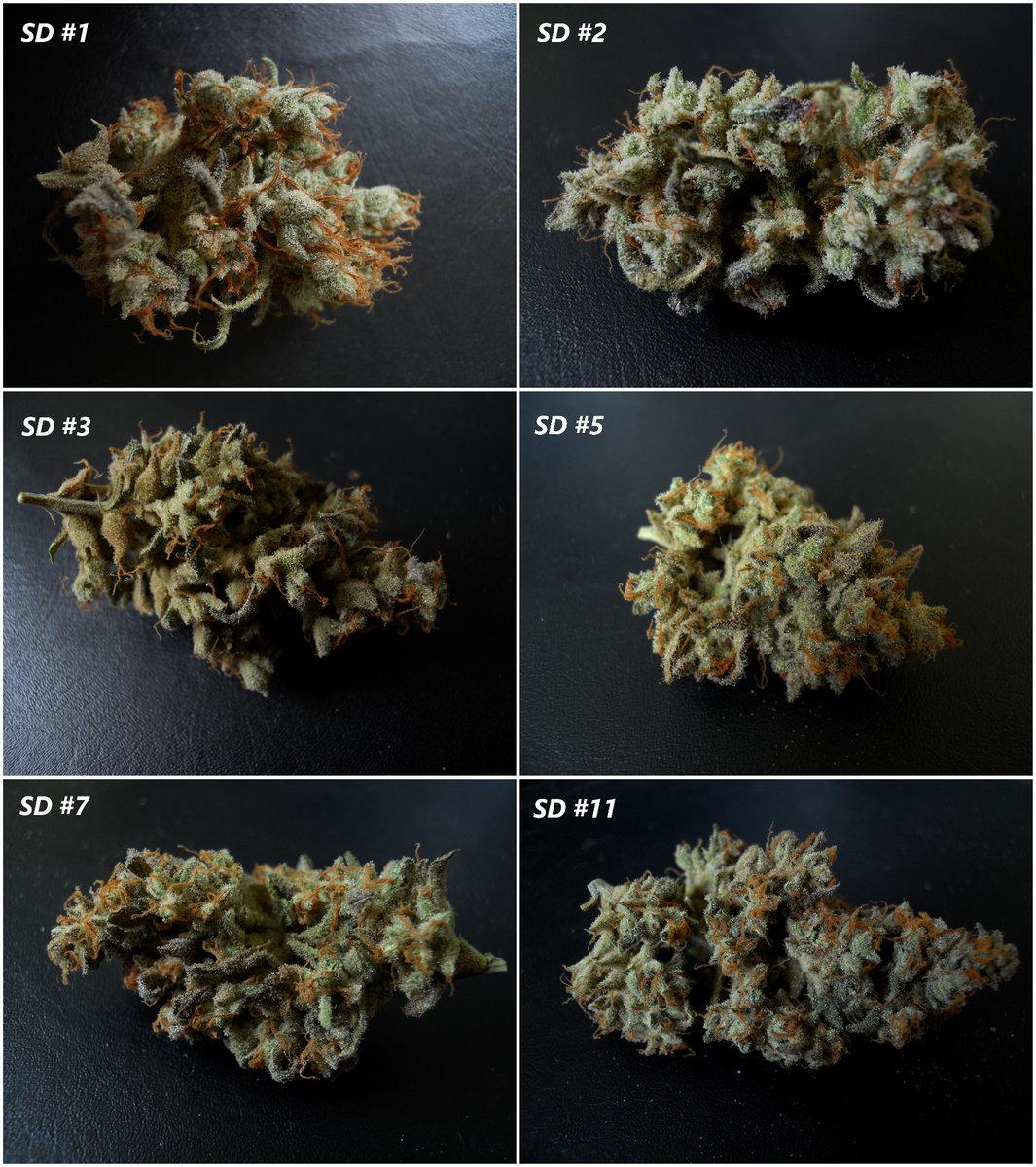 Mozaïque F4 SD (F3#1.3) - Flo +90 c Boutons floraux.JPG