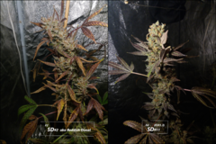 SD - Comparaison F2SD#2 et F4#11.png