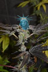 Luruority of Liberty