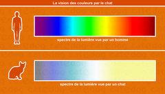 vision-des-couleurs-par-le-chat.jpg