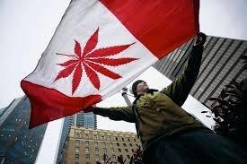 Cannabis : 30 % de moins pour le marché noir selon Ottawa