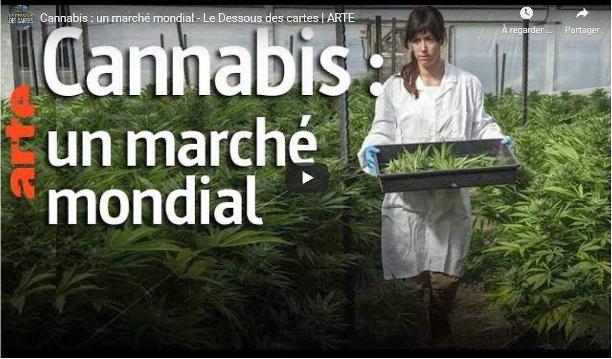 Le Dessous des cartes - Cannabis : un marché mondial