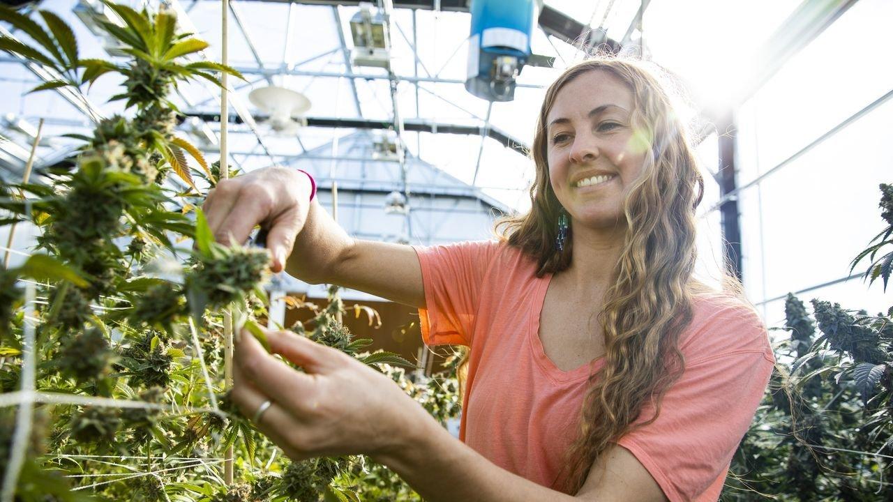 Ce que les Etats-Unis font mieux que la France : l'industrie du cannabis