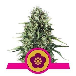 power-flower.jpg.eb9cb2765ac2ae0772addef929b50bc3.jpg